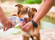Kakšno empatijo imate do živali in ljudi? Koga bi rešili, če bi se znašli v tej situaciji?!