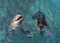Pes je padel v kanal in skoraj utonil. Delfini so se mu približali in naredili tole ...