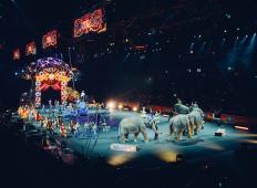 Končno se začne premikati: Ta država bo prepovedala živali v potujočih cirkusih!