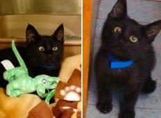 Tole mačko je nekdo odvrgel, ker škili. Toda ko boste videli, kako prisrčna je, ne boste mogli verjeti!
