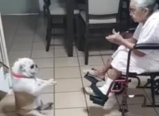 Babica začne ploskati. Njen kužek začne plesati ... DOBESEDNO!