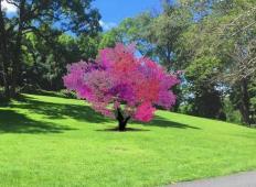 Umetnik ustvaril posebno drevo, ki daje 40 različnih sadežev. Česa takšnega še niste videli!
