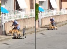 Starejši gospod je za svojega psa invalida izdelal poseben voziček. Zdaj ga vsak dan pelje na sprehod