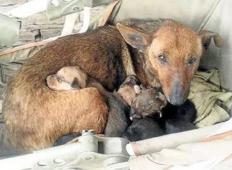 Potepuška psica je skrbela za zapuščenega otroka, ki bi sicer zmrznil. Psi imajo več srca kot nekateri ljudje!