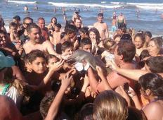 Majhnega delfinčka je naplavilo na obalo. Turisti so ga vzeli v roke in se z njim fotografirali, on pa je zaradi dehidracije poginil …