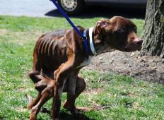 Ko so tega kužka našli med smetmi, so mislili, da je mrtev. A dokazal jim je, kako zelo si želi živeti!