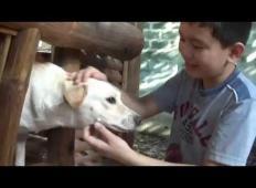 Starši so mu dajali denar za avtobus, toda on je hranil lačne kužke. Ko so mu začeli slediti, kam hodi po šoli ...