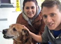 17-letni pes je bil osamljen v zavetišču. Potem ga je zagledal mlad par, ki je prišel podarit hrano in zgodi se tole …