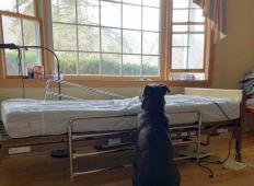 Njegov lastnik je na žalost umrl. Toda kužek ga je takole čakal ob bolnišnični postelji, da se vrne ...