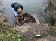 Psički so zavezali povodec okrog skale in jo vrgli v reko. Medtem ko se je utapljala, pride mimo tale gospa ...