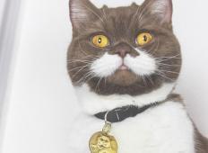 Ne boste verjeli. Tale maček ima posebne brke, kot jih še niste videli!