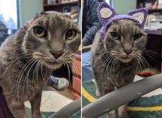 Potepuški mački so morali zaradi okužbe odstraniti ušesa. Nato so ji namesto ušes naredili tole in dobila je posvojitelje!