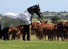 Veličastni konj opazi, da ga čreda krav pozorno opazuje. Zato se odloči, da bo zanje naredil pravi spektakel!