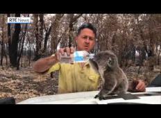 Utrujeni gasilec si vzame oddih od gašenja požarov v Avstriji. Ko zagleda žejno koalo, stori nekaj ganljivega!
