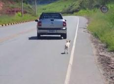 Kolesarka ujame trenutek, ko lastniki odvržejo svojega kužka ob cesti. Je lahko kaj hujšega?