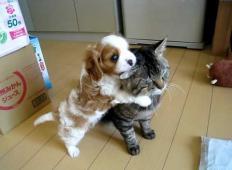 Kako srčkano: majhen kužek se želi igrati, toda mačka ni navdušena