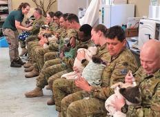 Avstralski vojaki v prostem času hranijo in pestujejo koale. Čudoviti in ganljivi prizori!