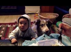 Mama je sinčku rekla, naj izgovori besedo mama. Toda bodite pozorni na družinskega kužka, kaj stori!