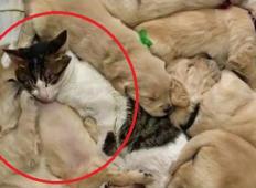Majhni pasji mladički imajo najboljšo varuško na svetu. Neverjetno!
