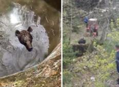 Ubogi medved padel v vodnjak in začel kričati. Domačini so pripeljali traktor in postali pravi junaki!