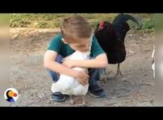 Fantek je povabil kokoš, da bi jo objel. To, kar je sledilo potem ...