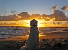 Psi nikoli ne umrejo. Spijo v tvojem srcu. Vsak ljubitelj živali naj to prebere!