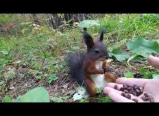 V gozdu je našel malo veverico. Ko ji je dal oreščke, je kar zmrznila.