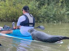 Par je užival v popoldanskem veslanju po reki. To, kar se pripeti kasneje ...