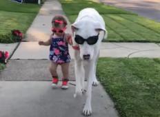 Z invalidnim psom so ravnali zelo kruto. Ko pa je spoznal malo deklico ...