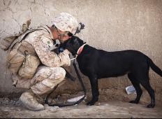 Moški posvojil psa in z njim dobil pismo prejšnjega lastnika. Vsebina pisma ga je spravila ob jok!