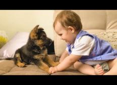 Deklica je prvič videla pasjega mladička: Posnetek vam bo polepšal dan!
