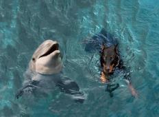 Pes je padel v kanal in skoraj utonil. Delfini so se mu približali in storili tole ...