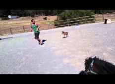 Če ste ljubitelji živali, se boste zaljubili v tega konjička. Tako je lovil svojega lastnika!