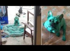 Lastnica kužkov doživela šok. To je prizor, ki mu ga je bila priča v kuhinji!