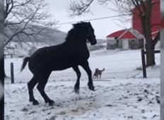 Poglejte, kako se je konj razveselil snega. Posnetek vam bo polepšal dan!