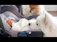 Ljubka psička prvič spoznata novega člana družine. Njuna reakcija vam bo polešala dan!