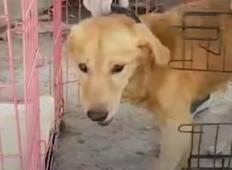 Pes je celo življenje preživel v kletki. Poglejte, kako vesel je danes!