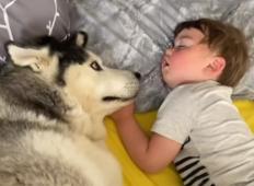 Haski nežko prebudil malčka v postelji. Prizor vam bo polepšal dan!
